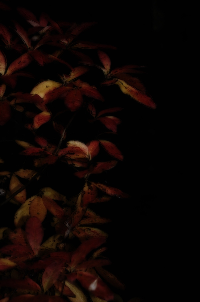 Midnight in the Garden