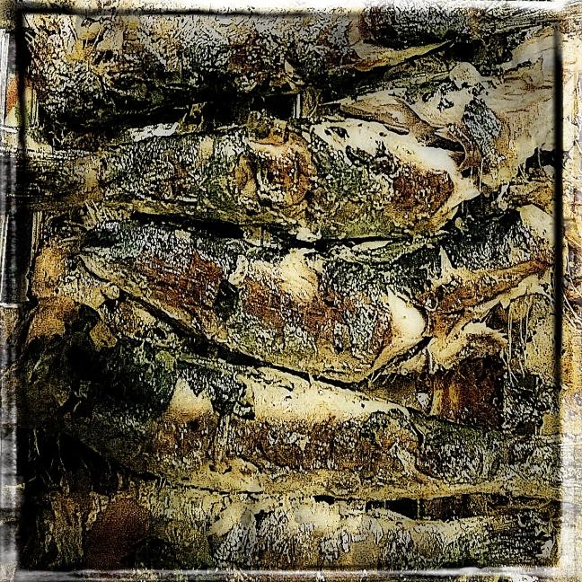 sardinen-04_02